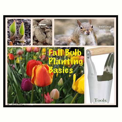 Fall Bulb Planting Basics