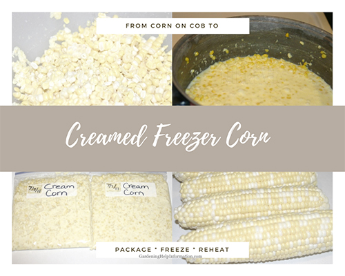 Creamed Corn Recipe from Garden Corn on Cob