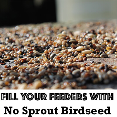Filling Your Bird Feeders With Non-Sprouting Seeds