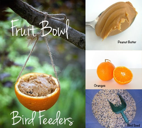 Fruit Bowl Bird Feeder  Save your orange and grapefruit halves to make fruit bowl bird feeders for the birds.