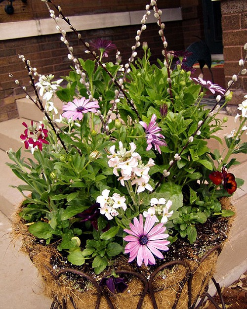 Spring potted planter ideas