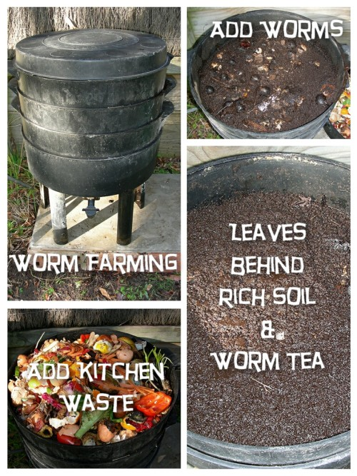 Composting With Worms - Complete guide including free eBook.