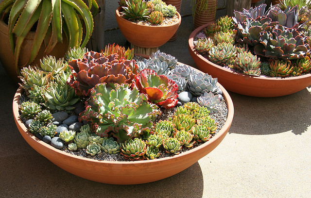 Brilliant Succulent Plant Ideas and How to Care For Them