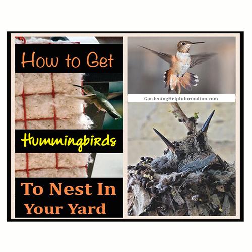 How to Get Hummingbirds to Nest Near You