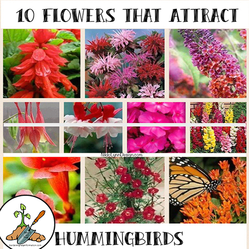 10 Flowers That Attract Hummingbirds