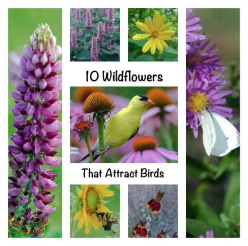 10 Wildflowers that Attract Birds to Your Yard