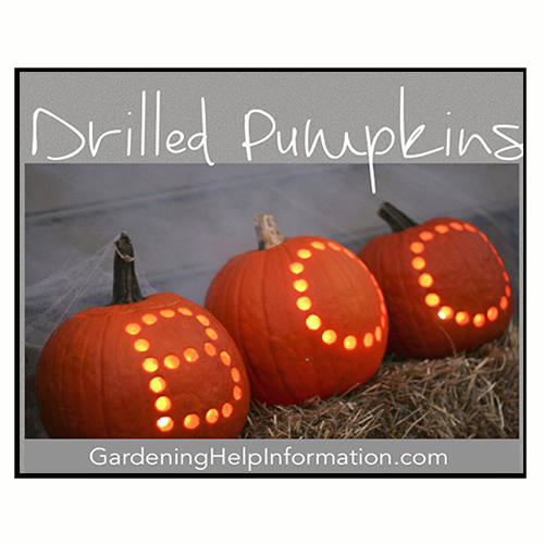 Drilling Fall Pumpkins