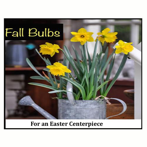 Fall Bulbs for an Easter Centerpiece