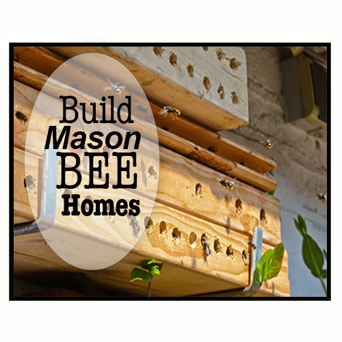 Attract Mason Bees by Building Homes