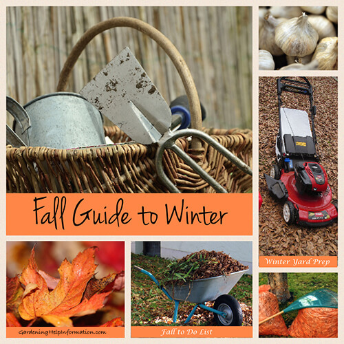 Fall Guide to Winter