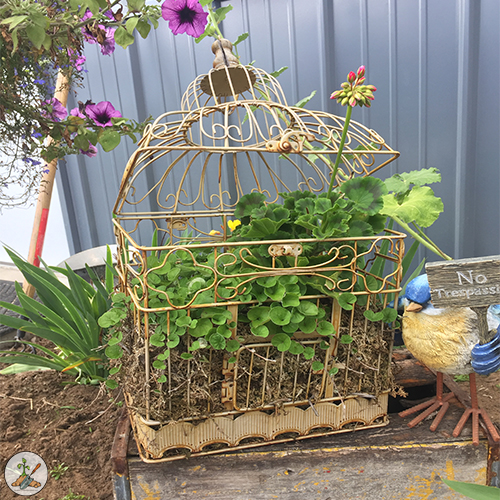 Old Bird Cage Garden Planter Filled With Geraniums Flowers For Outdoor Yard Decor