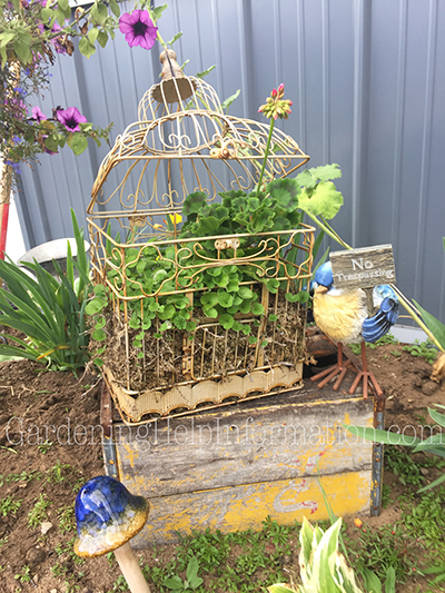 Old Bird Cage Garden Planter