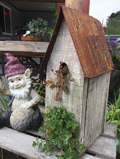 Old Birdhouse Planter