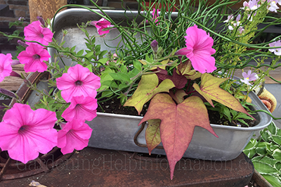 Roasting Pan Repurposed Garden Flower Planter