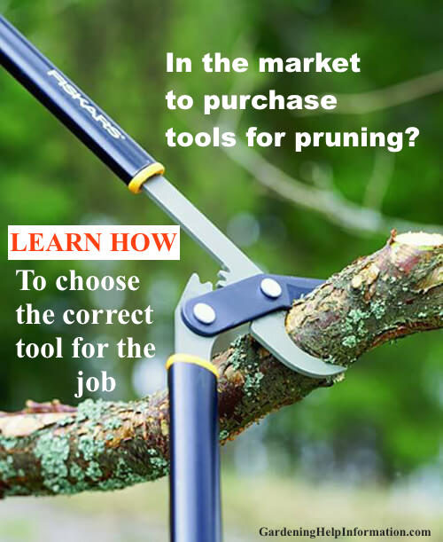 Shear Saw and Lop Your Way to the Perfect Cut
