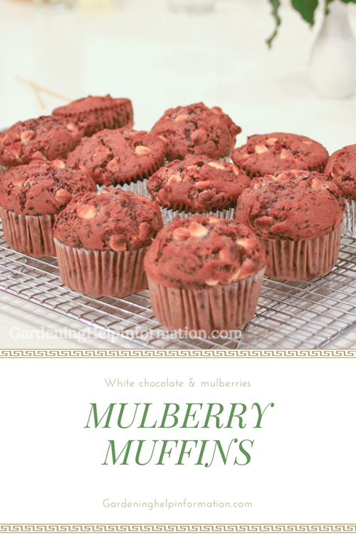 Mulberry Muffins