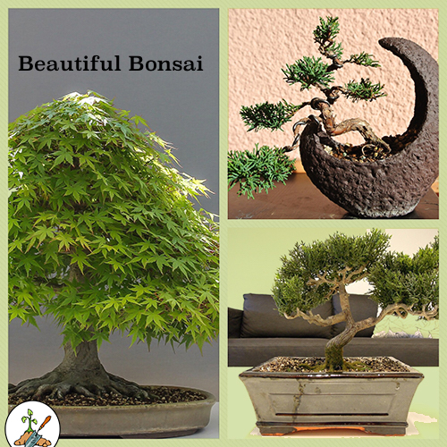 Beautiful Bonsai Plants
