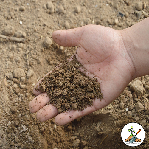 There are three elements all garden soil should have, a healthy balance of each will provide the best possible outcome for your garden plants.   Sand, clay and humus. What is the healthy balance?  How do you achieve it?