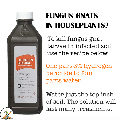 DIY Recipe To Get Rid of Indoor Fungus gnats ion houseplants.  Fungus gnats are little black flies on houseplants.