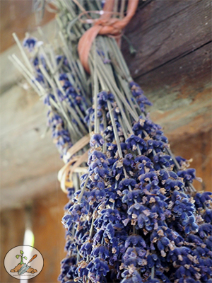 Hang Lavender upside down by rubber band to air dry.  Use this method to dry most garden flowers.