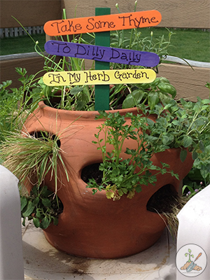 Herb Planter With a Variety of herbs planted