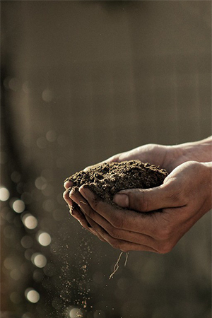How to make rich garden soil for growing your plants