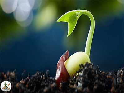 Testing garden seed will save time and money