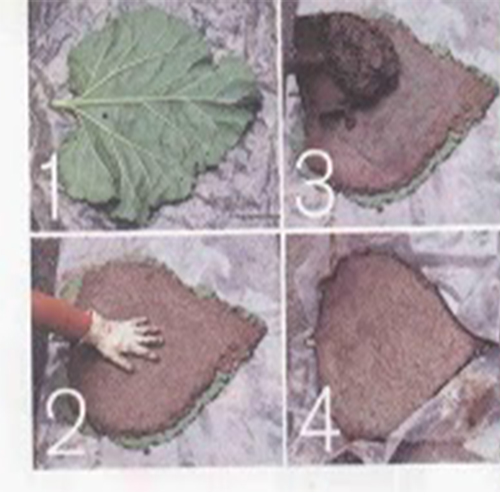 How to Make Rhubarb Leaf Garden Stepping Stones