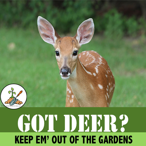 Stop Deer From Eating Your Garden Plants With This Organic Deer Plant Repellent Recipel