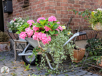 Wheelbarrow Planted With Geraium Flowers Go Big Or Go Home Planter