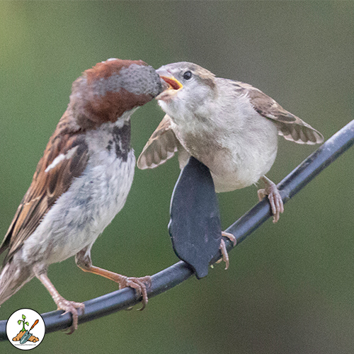 Pictures and information to help you get to know and attract songbirds.  The postings will have information on what your guest eats, breeding habits, migration and how to attract the critters to your feeders and backyard.
