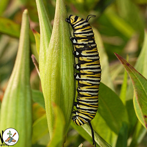 Variety of insects that may be found on plants in your yard, flower garden and vegetable gardens. Some of the insects you will find to be favorable;, others, not so much.