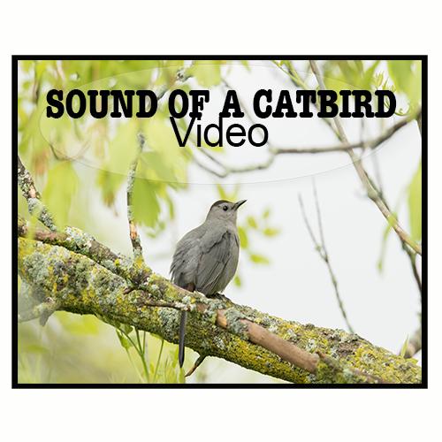 Cat Getting Bird