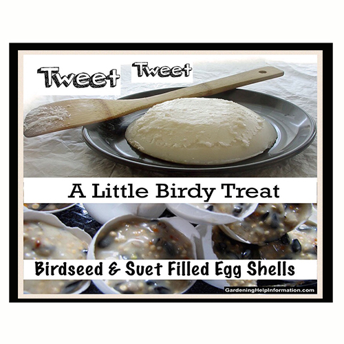 Bird seed suet filled egg shell recipe weed it reap bird seed suet filled egg shell recipe forumfinder Image collections
