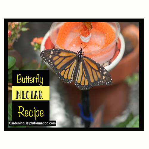 how to make butterfly food