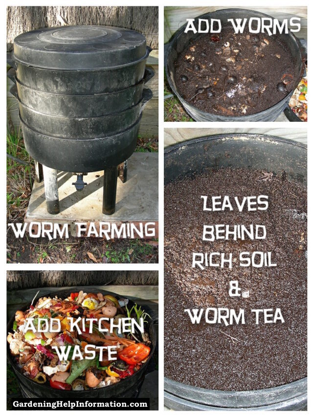 vermicomposting composting and free worms Vermicomposting vermicomposting is the practice of using worms to break down food scraps the resulting material is a mix of worm castings and.